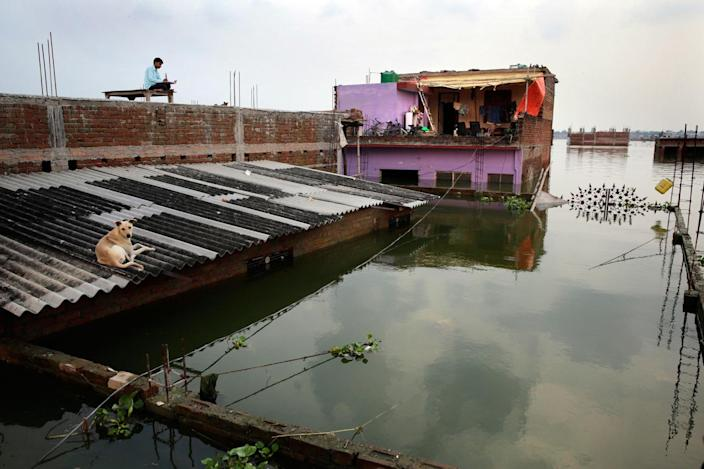 <p>A man and a dog take refuge on the roof of their submerged house in Allahabad, India, Thursday, Aug. 25, 2016. (AP Photo/Rajesh Kumar Singh)</p>