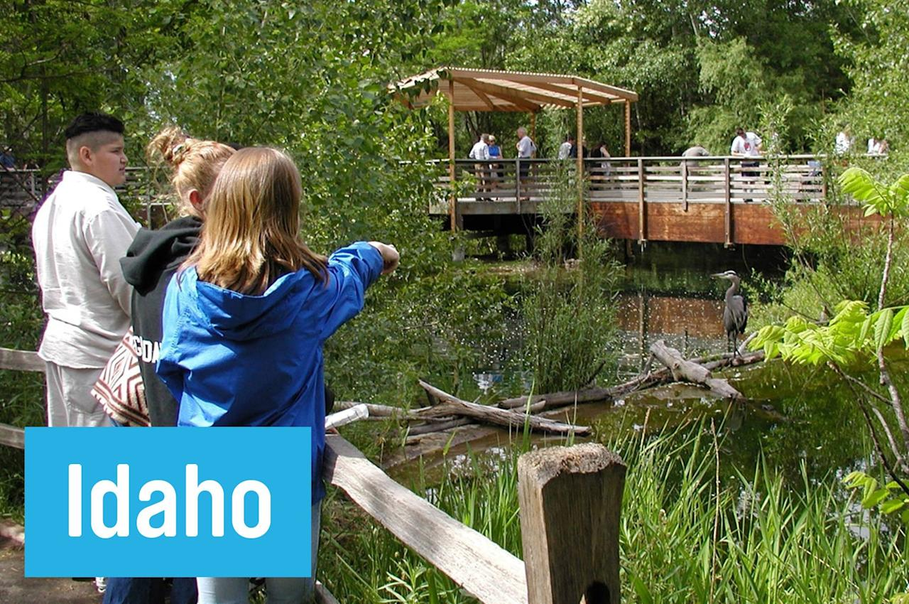 "Spot sturgeon, salmon, and trout from the underwater viewing windows at <a href=""http://fishandgame.idaho.gov/public/education/?getPage=234"">Morrison Knudsen Nature Center</a> in Boise. There's also an informative <a href=""//fishandgame.idaho.gov/public/education/?getPage=237"">""stream walk"" </a>where you might spot a beaver dam or two clogging up the waterfalls."