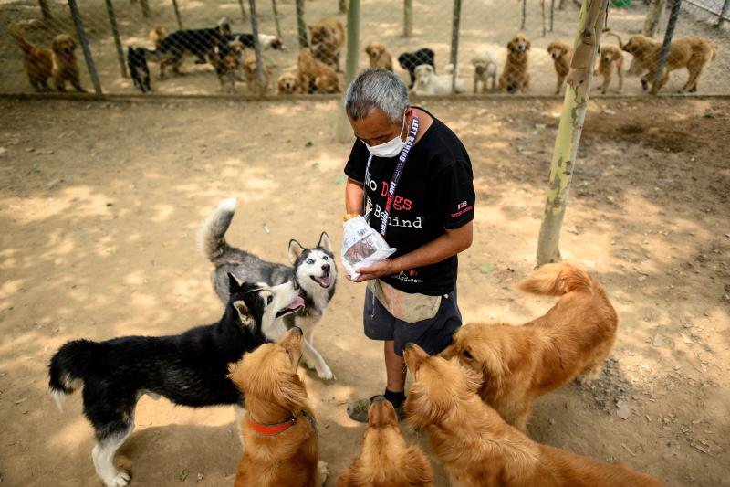 A worker with No Do Left Behind is seen giving treats to rescued dogs at a shelter on the outskirts of Beijing. Source: AFP