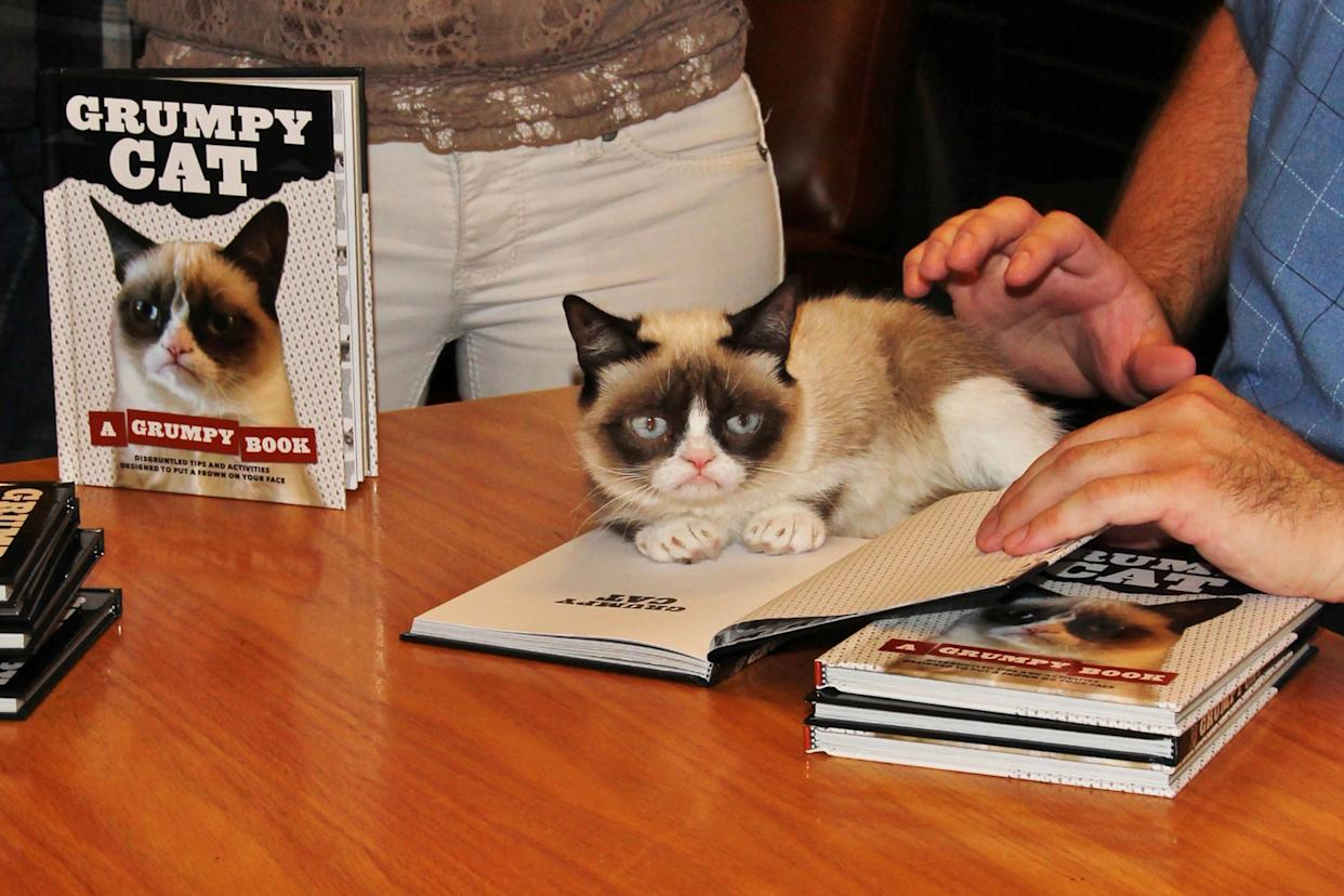 Grumpy Cat does not look impressed at her book signing in Los Angeles. (Credit: AKM-GSI)