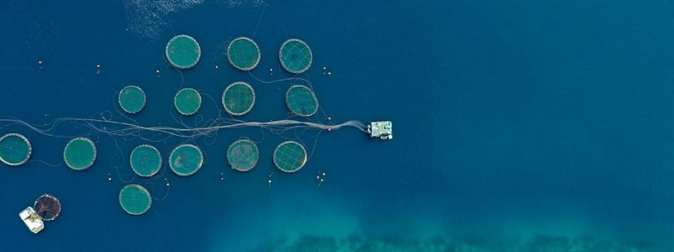 Aerial drone photo of large fish farms