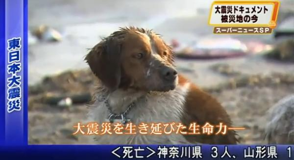 A shivering dog remains loyally by the side of a stricken fellow canine amid the devastation of the Japanese tsunami. (YouTube screen grab)