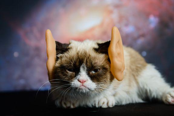 Grumpy Cat was out of this world.
