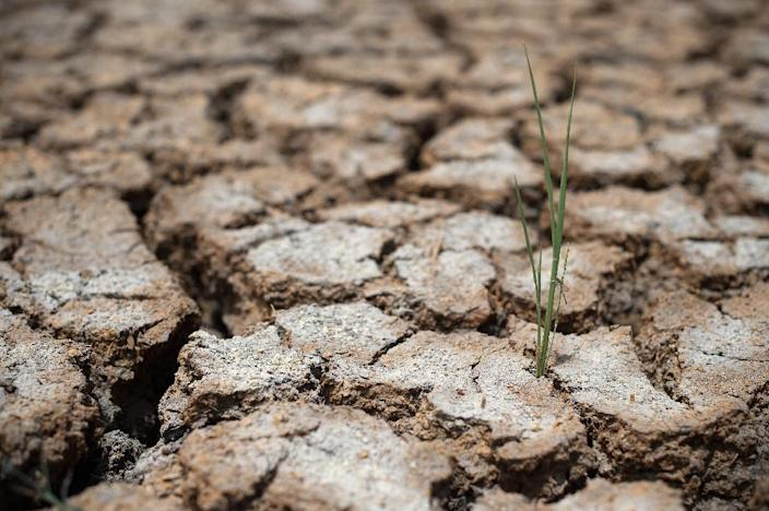 The unprecedented degradation of Earth's natural resources coupled with climate change could reverse major gains in human health over the last 150 years, according to a sweeping scientific review published (AFP Photo/Nicolas Asfouri)