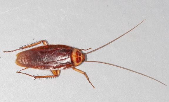 Roaches in NYC Cluster by Neighborhood