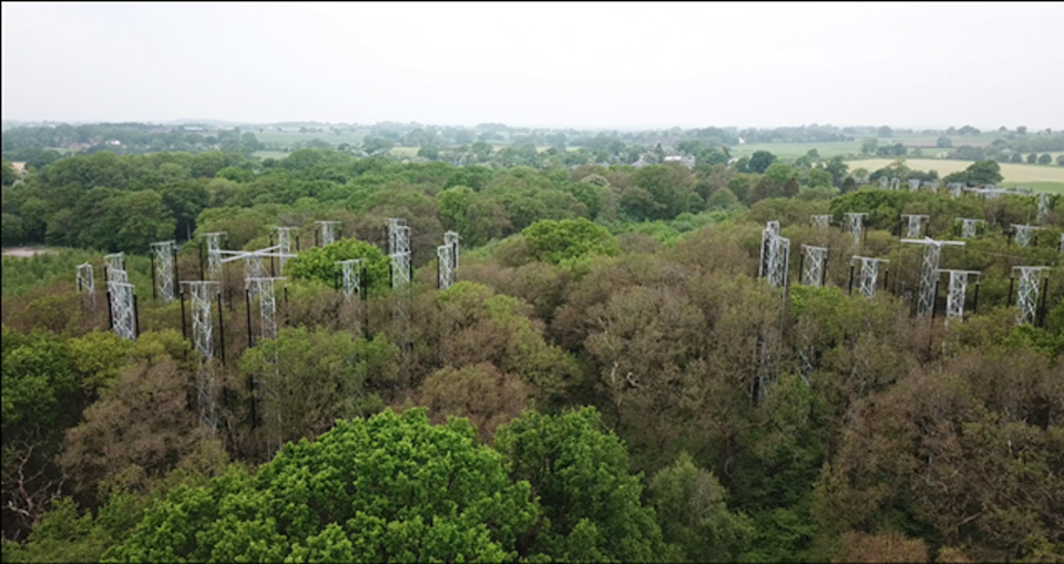 Research plots in the Free Air CO2 Enrichment (FACE) facility located in a Staffordshire forest (University of Birmingham Institute of Forest Research )