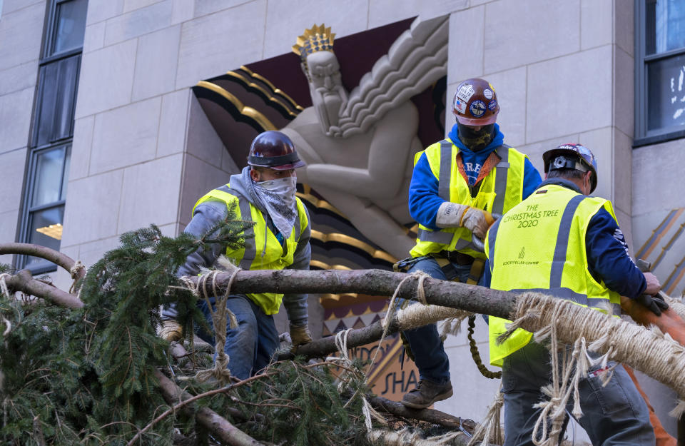 Workers secure branches of the 2020 Rockefeller Center Christmas tree, a 75-foot tall Norway Spruce that was acquired in Oneonta, N.Y., as its prepared for setting on a platform at Rockefeller Center Saturday, Nov. 14, 2020, in New York. (AP Photo/Craig Ruttle)