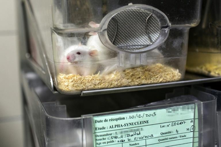 Brain gain: Early stimulation gives mice life-long benefits