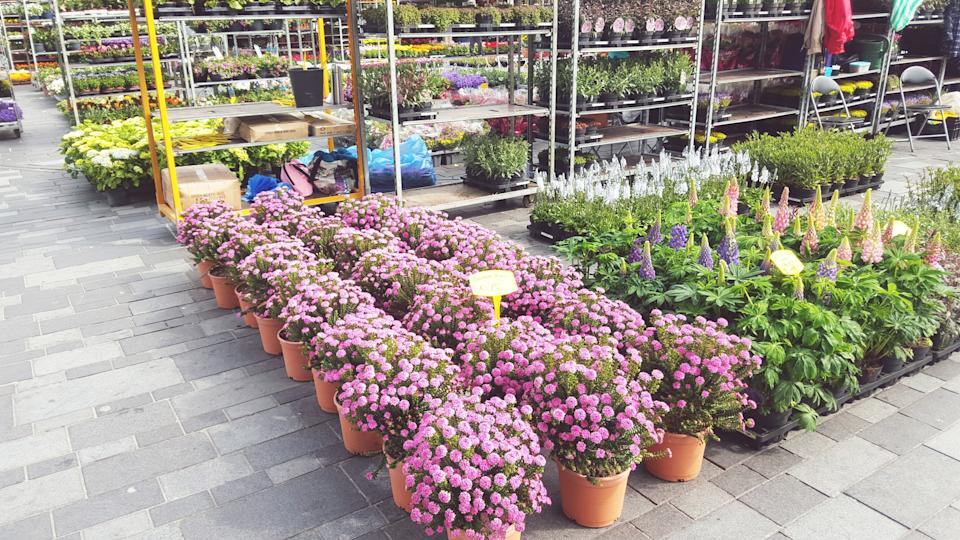 Garden centres are closed due to coronavirus. (Getty Images)