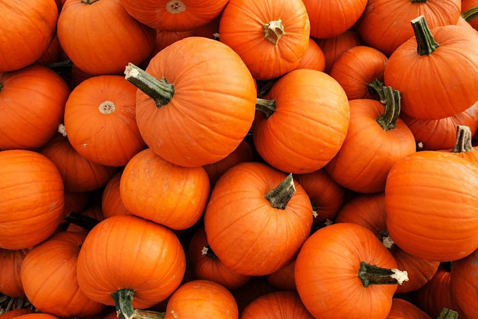 """<p>Just ask any jack-o'-lantern, pumpkin season starts in September in much of the country and goes strong through October. Of course, when it comes to culinary uses, smaller pie pumpkins (also called sugar pumpkins) are best and can be used just like canned pumpkin in <a href=""""https://www.thedailymeal.com/cook/pumpkin-pie-from-scratch?referrer=yahoo&category=beauty_food&include_utm=1&utm_medium=referral&utm_source=yahoo&utm_campaign=feed"""" rel=""""nofollow noopener"""" target=""""_blank"""" data-ylk=""""slk:pumpkin pie"""" class=""""link rapid-noclick-resp"""">pumpkin pie</a>. If you want to <a href=""""https://www.thedailymeal.com/entertain/10-autumn-recipes-will-make-you-love-pumpkin-spice-after-all-slideshow?referrer=yahoo&category=beauty_food&include_utm=1&utm_medium=referral&utm_source=yahoo&utm_campaign=feed"""" rel=""""nofollow noopener"""" target=""""_blank"""" data-ylk=""""slk:get creative with pumpkin"""" class=""""link rapid-noclick-resp"""">get creative with pumpkin</a>, <a href=""""https://www.thedailymeal.com/recipes/pumpkin-tacos-chorizo-and-chipotle-recipe?referrer=yahoo&category=beauty_food&include_utm=1&utm_medium=referral&utm_source=yahoo&utm_campaign=feed"""" rel=""""nofollow noopener"""" target=""""_blank"""" data-ylk=""""slk:try this sweet squash in tacos"""" class=""""link rapid-noclick-resp"""">try this sweet squash in tacos</a> or <a href=""""https://www.thedailymeal.com/best-recipes/roasted-pumpkin-meat-sauce-yogurt?referrer=yahoo&category=beauty_food&include_utm=1&utm_medium=referral&utm_source=yahoo&utm_campaign=feed"""" rel=""""nofollow noopener"""" target=""""_blank"""" data-ylk=""""slk:roasted and served with meat sauce"""" class=""""link rapid-noclick-resp"""">roasted and served with meat sauce</a>.</p>"""