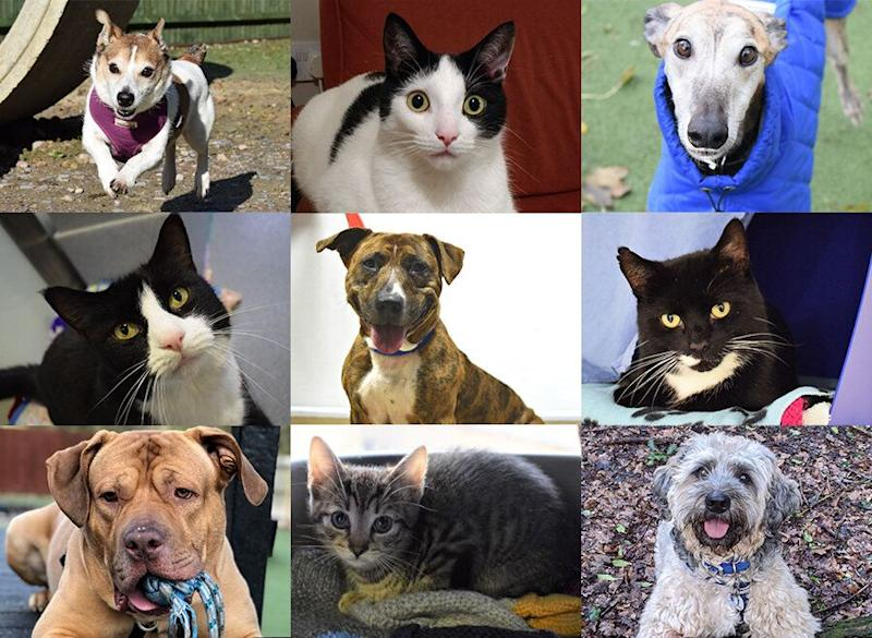 Animals rehomed from Battersea Dogs and Cats Home this month. (Photo: Battersea)