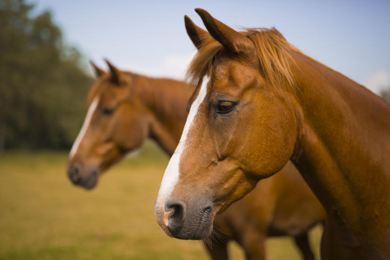 Family finds its horse butchered in 'horrific crime'