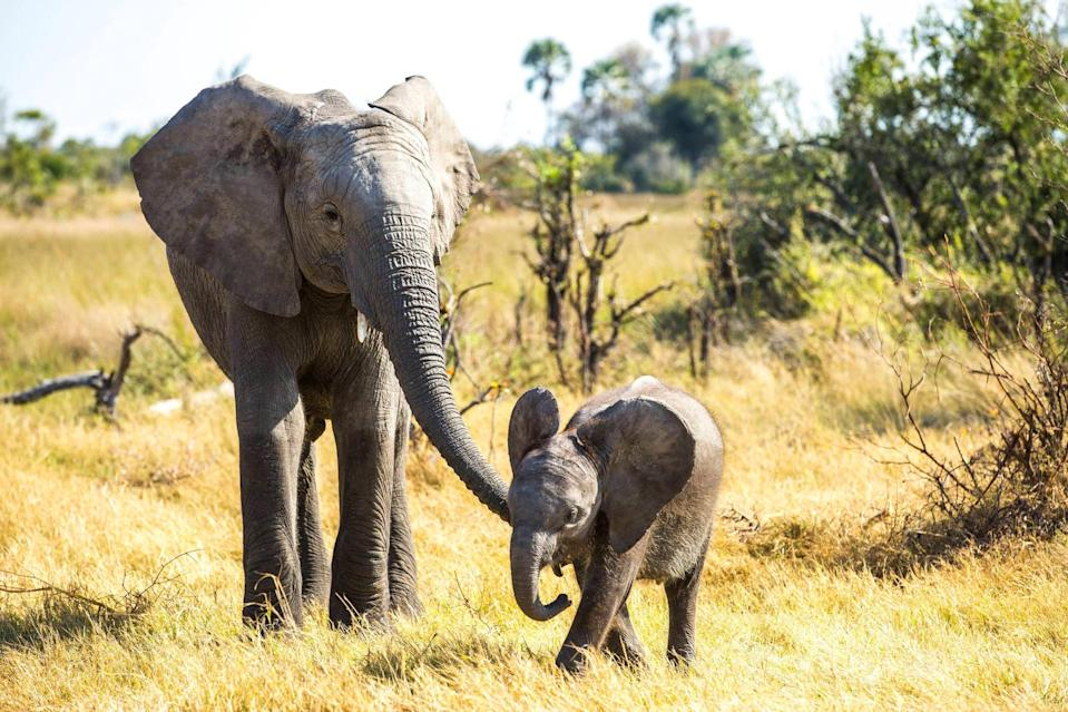 """<p>How could a movie about a baby elephant not soothe the soul? The emotional film features scientists and animal experts who fight to save an orphaned baby elephant and her species.</p> <p>Watch <a href=""""http://www.netflix.com/title/80135296"""" class=""""link rapid-noclick-resp"""" rel=""""nofollow noopener"""" target=""""_blank"""" data-ylk=""""slk:Naledi: A Baby Elephant's Tale""""><strong>Naledi: A Baby Elephant's Tale</strong></a> on Netflix now.</p>"""