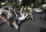 Policemen carry away a member of India's opposition Congress party during a protest against agriculture bills in New Delhi, India, Monday, Sept. 21, 2020. Amid an uproar in Parliament, Indian lawmakers on Sunday approved a pair of controversial agriculture bills that the government says will boost growth in the farming sector through private investments. (AP Photo/Manish Swarup)
