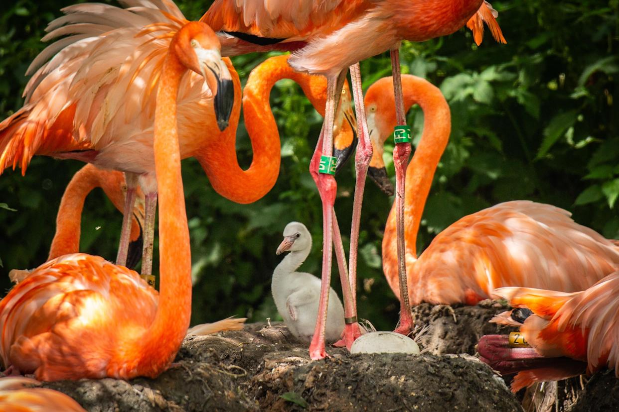 (ZSL Whipsnade Zoo/PA)