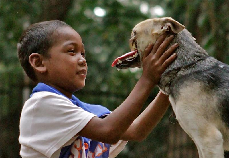 File - In this August, 12, 2012 file photo provided by the University of California, Davis, a Bunggal family member plays with Kabang the dog in the Philippines.  A veterinarian at the University of California, Davis, has some good news about a dog from the Philippines who became an international hero after sacrificing its snout to save two young girls. Veterinarian Gina Davis says the dog named Kabang appears to have beaten the cancer it was suffering from. (AP Photo/UC Davis, Anton Lim, File)