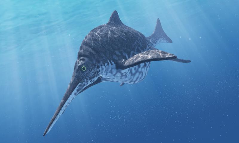 An artist's impression of a Shonisaurus, a type of ichthyosaur. (Getty)