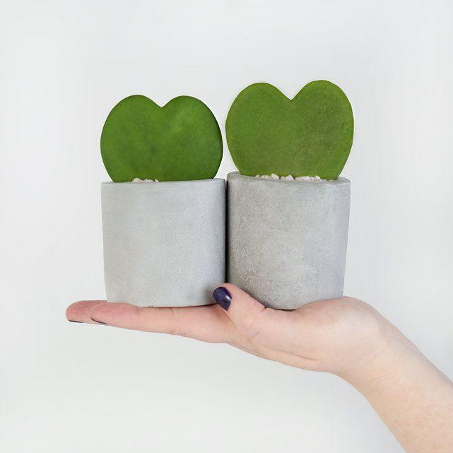 """<h3><h2>Hoya Hearts</h2></h3><br><strong>Why She'll Love It</strong><br>This duo of heart-shaped succulents is actually rooted leaves cut from the Hoya Kerri plant. Planted in a sleek concrete pot, it will serve as a sweet little reminder to mom of just how much you love her.<br><br><strong>Care</strong><br>Place these little love-plants in either bright indirect light or full sunshine and water when soil is completely dry and it starts to wrinkle.<br><br><strong>Deal</strong><br><strong>Order early for Mother's Day and save $15 with code INAFLASH</strong><br><br><em>Shop <strong><a href=""""https://bouqs.com/flowers/mothers-day"""" rel=""""nofollow noopener"""" target=""""_blank"""" data-ylk=""""slk:The Bouqs Co."""" class=""""link rapid-noclick-resp"""">The Bouqs Co.</a></strong></em><br><br><strong>The Bouqs Co</strong> Desert Love Hoya Heart Duo, $, available at <a href=""""https://go.skimresources.com/?id=30283X879131&url=https%3A%2F%2Fbouqs.com%2Fplants%2Fall%2Fhoya-hearts"""" rel=""""nofollow noopener"""" target=""""_blank"""" data-ylk=""""slk:The Bouqs Co"""" class=""""link rapid-noclick-resp"""">The Bouqs Co</a>"""