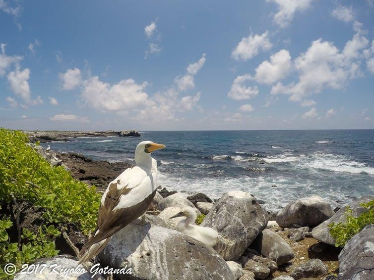 A large bird looks out to sea.
