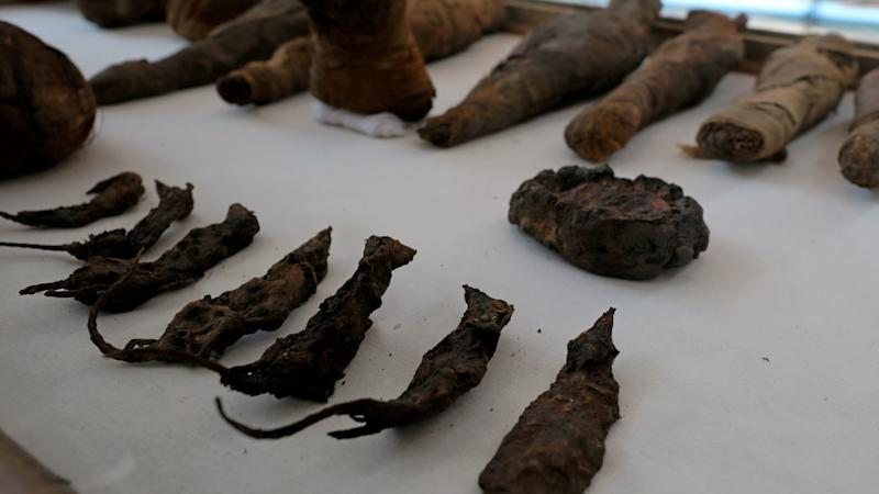 Dozens of mummified mice found in ancient Egyptian tomb dating back 2,000 years