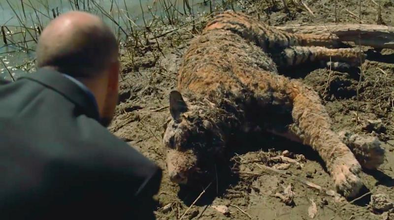 Delos exec Karl Strand inspects the Bengal tiger host: HBO
