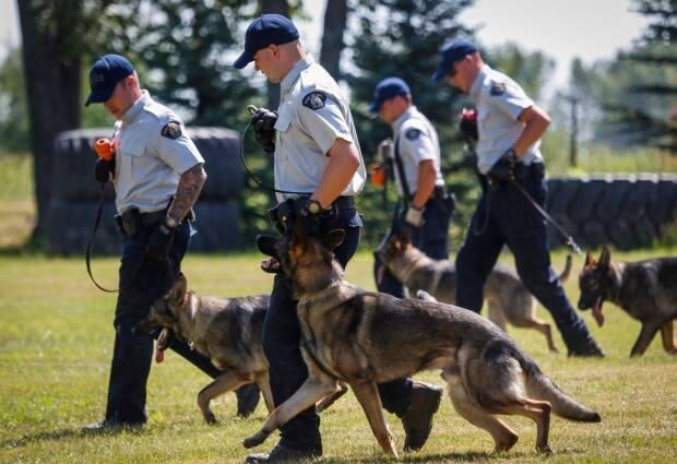 The IIO has filed a report for consideration of charges after a police dog injured a man during an arrest in Abbotsford, B.C.