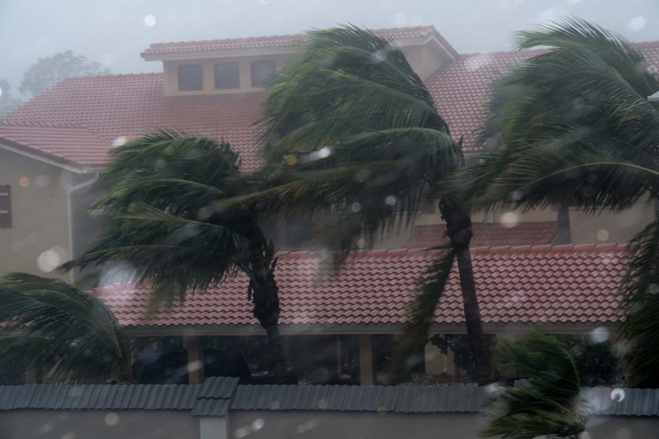 Palm trees blow in the winds of hurricane Irma in Bonita Springs, Florida, northeast of Naples, on September 10, 2017. Hurricane Irma regained strength to a Category 4 storm early as it began pummeling Florida and threatening landfall within hours. / AFP PHOTO / NICHOLAS KAMM        (Photo credit should read NICHOLAS KAMM/AFP via Getty Images)