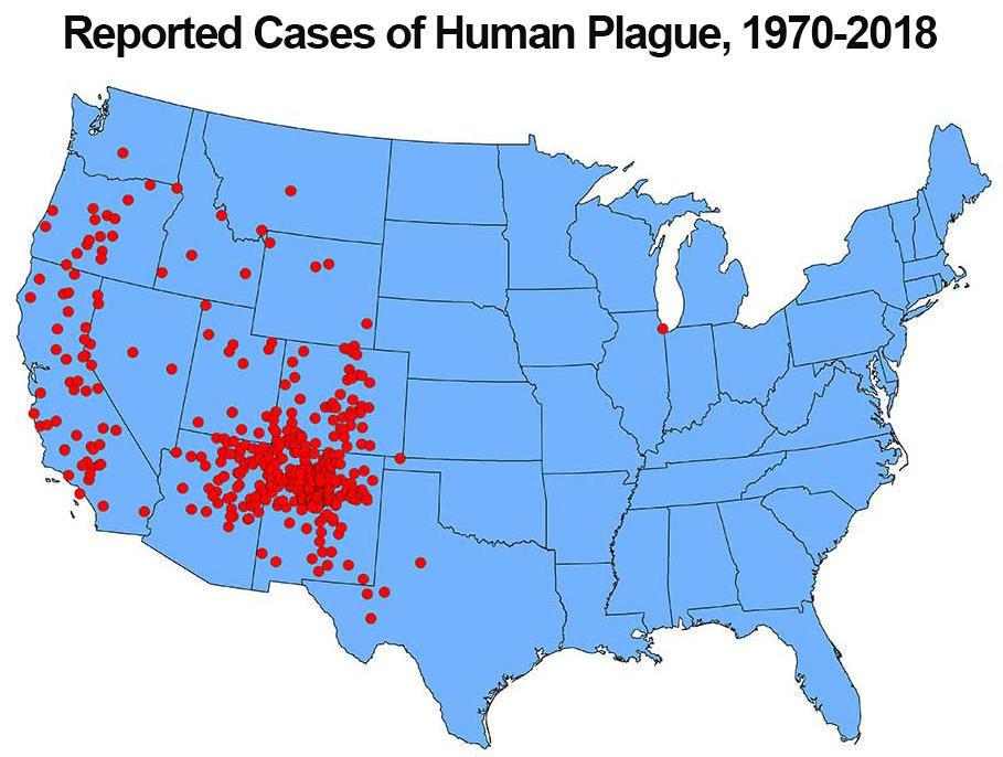 Since the mid–20th century, plague in the United States has typically occurred in the rural West. The case shown in Illinois was lab-associated. / Credit: CDC