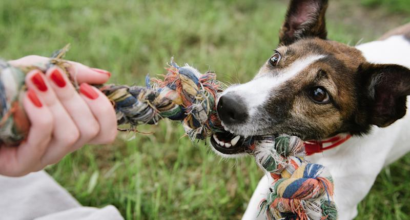 If you suspect your dog has ingested anything other than food, it's best to seek immediate medical advice. Source: Getty