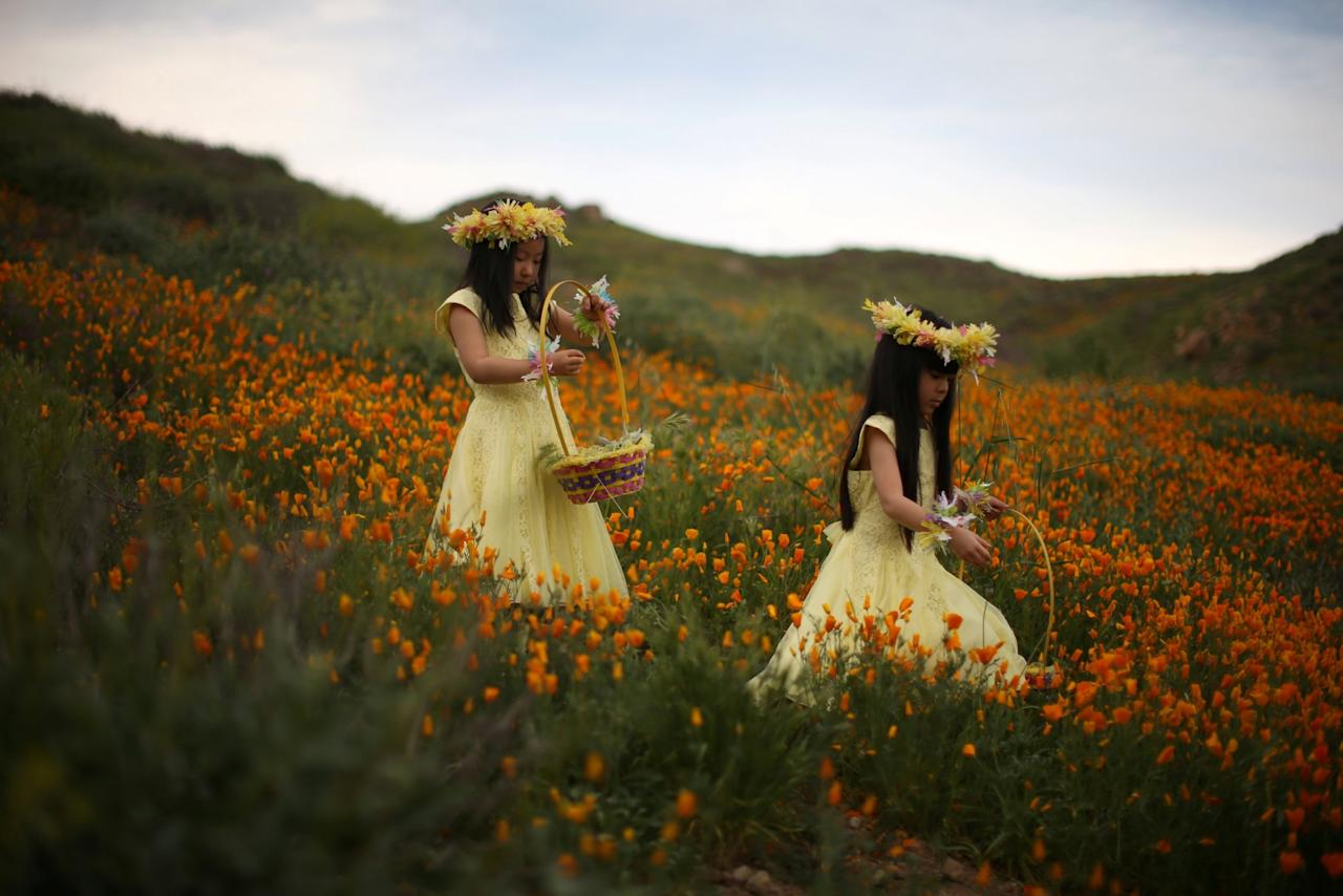 <p>Julia Lu, 5, (L) and Amy Liu, 5, walk through a massive spring wildflower bloom caused by a wet winter in Lake Elsinore, California, U.S. </p>