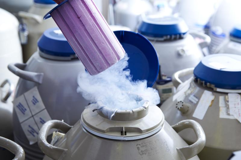 Egg storage for in vitro fertilisation (IVF). Tube of eggs in cryogenic (frozen) storage.