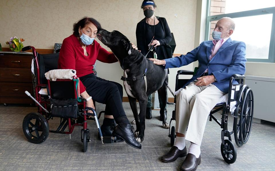 Sal Markowitz, 96, right, and Sandra Greer, 82, left, visits with Marley, a Great Dane, while therapeutic activities director Catherine Farrell looks on at The Hebrew Home at Riverdale in New York - Seth Wenig / AP
