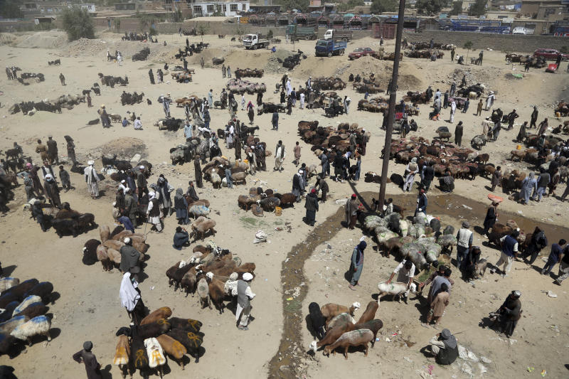 Afghan livestock merchants display animals for the upcoming Muslim Eid al Adha holiday in Kabul Afghanistan Monday Aug. 20 2018. During the Eid al-Adha or Feast of Sacrifice which in most places lasts four days Muslims slaughter sheep or cattle