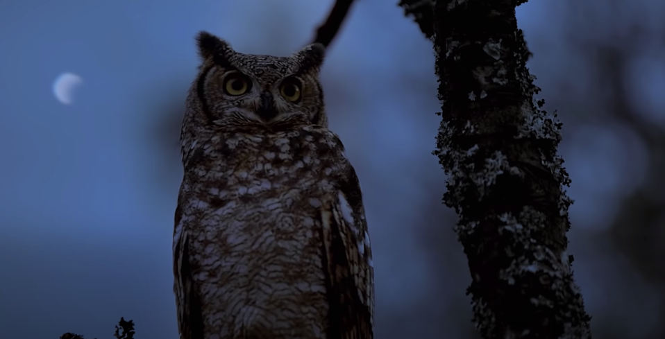 <p>State-of-the-art cameras show the nocturnal lives of animals across six continents in this docuseries hosted by Tom Hiddleston. </p> <p><em>Available on Apple TV+</em></p>