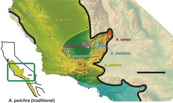 A map showing where the new legless lizard species are found.