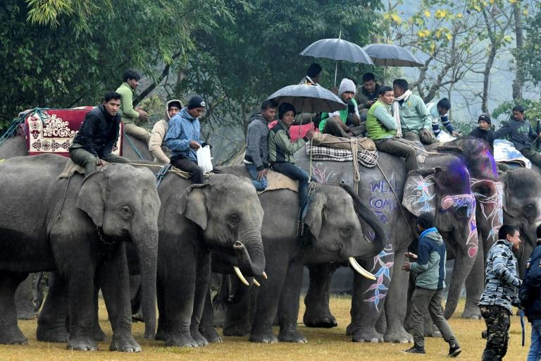 Elephants took part in football, polo and races at an annual festival in Nepal