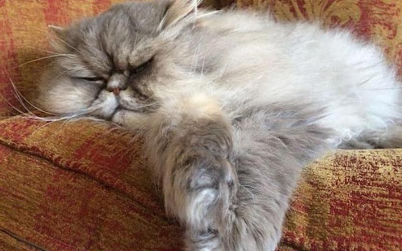 Police are linking the killing of three cats in Portsmouth with the