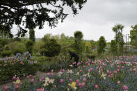 English gardener Claire-Helene Marron works in the garden of Claude Monet's house, French impressionist painter who lived from 1883 to 1926, ahead of the re-opening, in Giverny, west of Paris, Monday May 17, 2021. Lucky visitors who'll be allowed back into Claude Monet's house and gardens for the first time in over six months from Wednesday will be treated to a riot of color, with tulips, peonies, forget-me-nots and an array of other flowers all competing for attention. (AP Photo/Francois Mori)