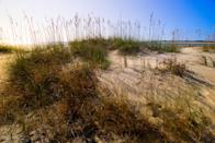 """<p><strong>Give us the wide-angle view: what kind of beach are we talking about?</strong><br> This undeveloped barrier island is one of the most dramatic spots along the entirety of the South Carolina coast. It's also home to some of the heaviest vegetation, and the narrow stretches of sand are lined with living and petrified palm trees (many damaged by Hurricane Hugo), giving it a surreal, otherworldly look.</p> <p><strong>How accessible is it?</strong><br> Capers Island can only be reached by boat, but you can find charters from <a href=""""https://www.cntraveler.com/activities/charleston/sullivans-island?mbid=synd_yahoo_rss"""" rel=""""nofollow noopener"""" target=""""_blank"""" data-ylk=""""slk:Sullivan's Island"""" class=""""link rapid-noclick-resp"""">Sullivan's Island</a>. If you're a little more adventurous (or more athletically inclined) you can canoe or kayak to the island under your own steam.</p> <p><strong>Decent services and facilities, would you say?</strong><br> It's a fairly remote and undeveloped island (hence the appeal); so you'll want to bring everything you might need with you, from bug spray to extra layers of clothing to water.</p> <p><strong>How's the actual beach stuff—sand and surf?</strong><br> If you come here with visions of sunbathing and picnicking, you'll be in the minority: Most people come to hike through the eerie beachside forest, and to photograph the tree skeletons and stumps that have been there for years, and have been bleached by the sun. There's also plenty of wildlife to look out for, from deer to loggerhead turtles to ospreys.</p> <p><strong>Can we go barefoot?</strong><br> The thin stretch of sand is soft enough, but you'll mostly be walking across timber and woodland area—so wear shoes that can withstand some serious use, especially closed-toe hiking boots if you're going to explore the forest.</p> <p><strong>Anything special we should look for?</strong><br> The front beach is known affectionately as the Bone Yard. This memorable collection of weird"""