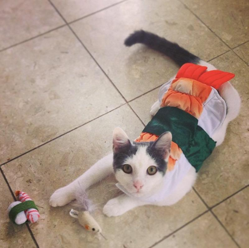 "<p>Sushi might be the perfect outfit for your cat while they are on the prowl. Look no further. <a href=""http://www.amazon.com/Rubies-Costume-Company-Sushi-Small/dp/B00JSMX0A8/ref=sr_1_2?s=pet-supplies&ie=UTF8&qid=1444239194&sr=1-2&keywords=fast+food+costume+pet"" rel=""nofollow noopener"" target=""_blank"" data-ylk=""slk:You can buy the ultimate zen sushi costume here."" class=""link rapid-noclick-resp""><b>You can buy the ultimate zen sushi costume here</b>.</a> And if you'd like to just flip through some adorable cats imagined as sushi, <a href=""http://www.incrediblethings.com/food/sushi-cats-a-bizarre-photoseries/"" rel=""nofollow noopener"" target=""_blank"" data-ylk=""slk:go here."" class=""link rapid-noclick-resp"">go here.</a> <i>Photo: Instagram/ @feb21kate</i></p>"