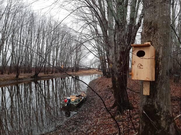 Ducks Unlimited set up a nest box for birds to come in and lay their eggs as part of the organization's research effort.