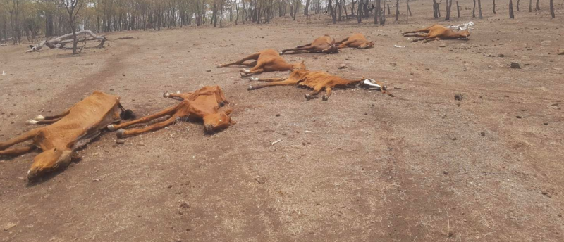 Six dead horses can be seen laying on the ground at the property. Source: Facebook