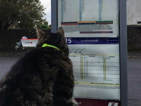 Scouting the next excursion: George regularly hops on buses and trains. (Facebook)