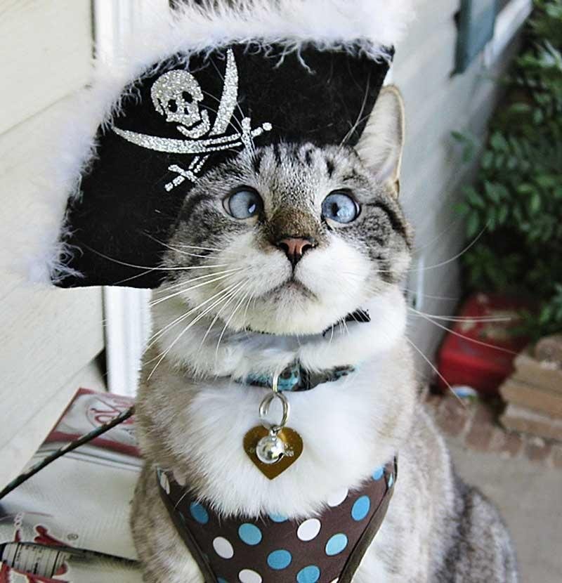 Spangles, the crossed-eyes kitty, became an internet sensation. His owner, 25-year-old Mary Buchanan of South Carolina, regularly posts photos of the three-year-old Spangles in a variety of different costumes to Facebook