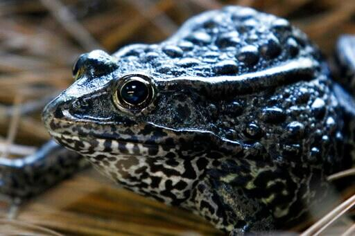 """US officials seek limits on """"habitat"""" for imperiled species"""