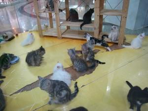 Many cats in the room