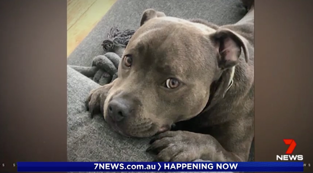 18-month-old Ava was stolen from a front yard in Port Melbourne on Sunday. Source: 7News