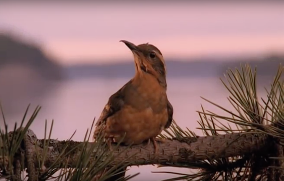 The bird from Twin Peaks' opening credits.