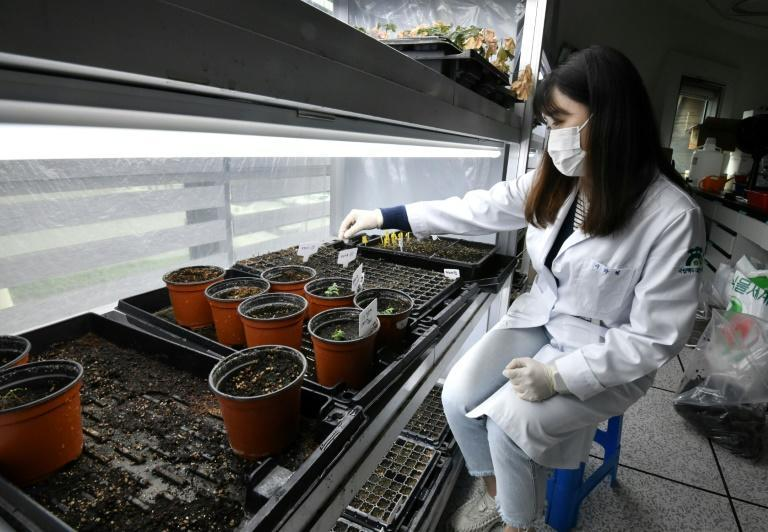 A researcher checks trial plantations at the wild plant seeds research division of the Baekdudaegan National Arboretum