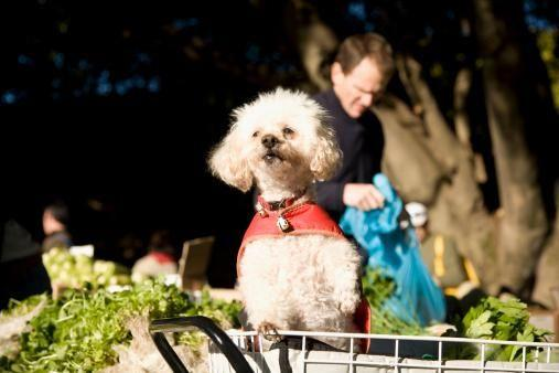 More dogs at markets? Yes, please!